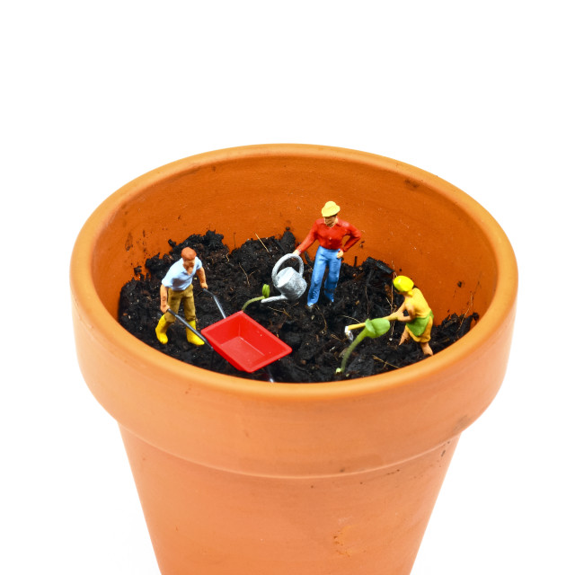 """Miniature figure gardeners watering seedlings"" stock image"