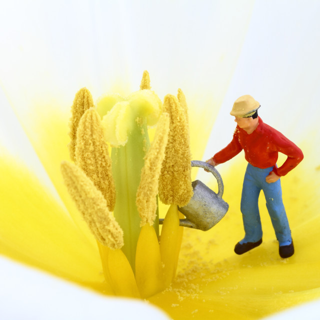 """Flower and gardening diorama"" stock image"