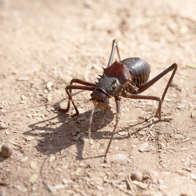 """""""An insect is walking in the desert"""" stock image"""