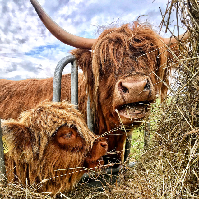 """Fresh hay day"" stock image"