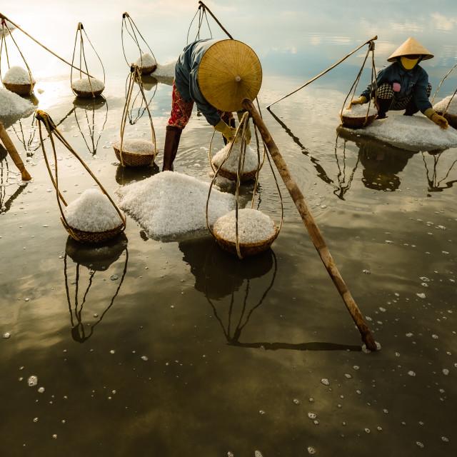 """Salt Harvest in Vietnam"" stock image"