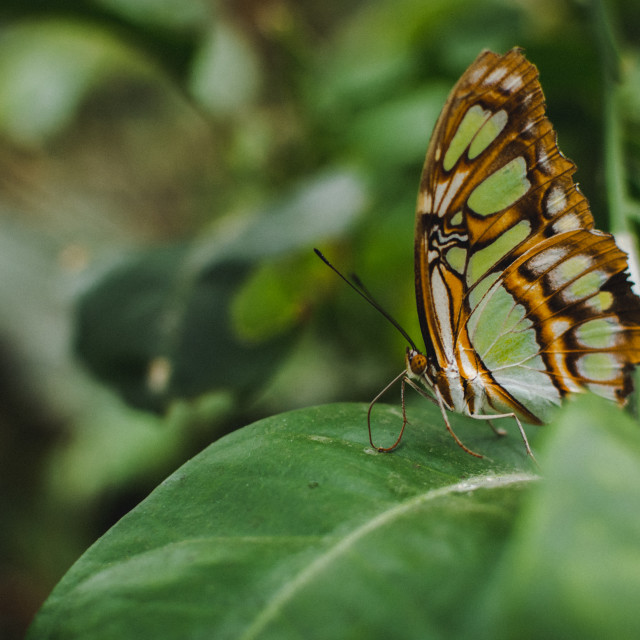 """""""Butterfly (6)"""" stock image"""