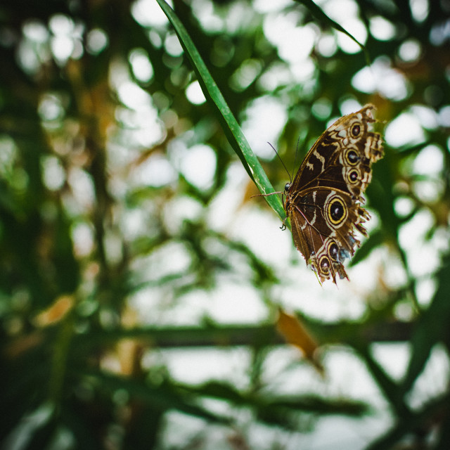 """""""Butterfly (8)"""" stock image"""