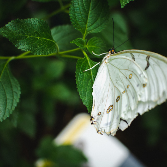 """""""Butterfly (9)"""" stock image"""