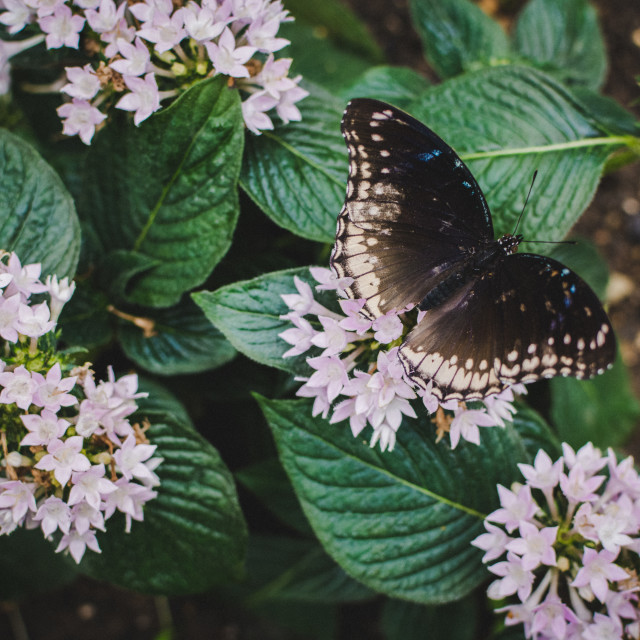 """""""Butterfly (10)"""" stock image"""