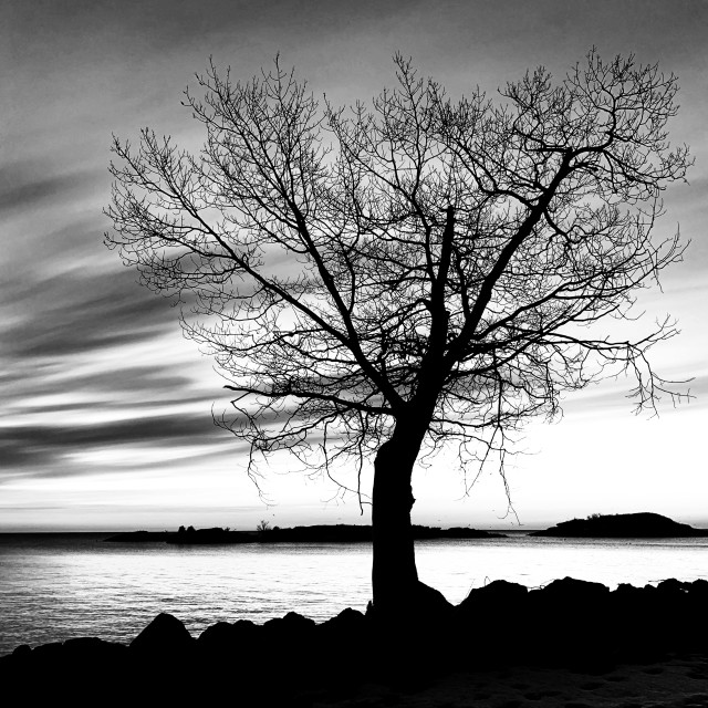 """""""Tree at Picnic Rocks"""" stock image"""