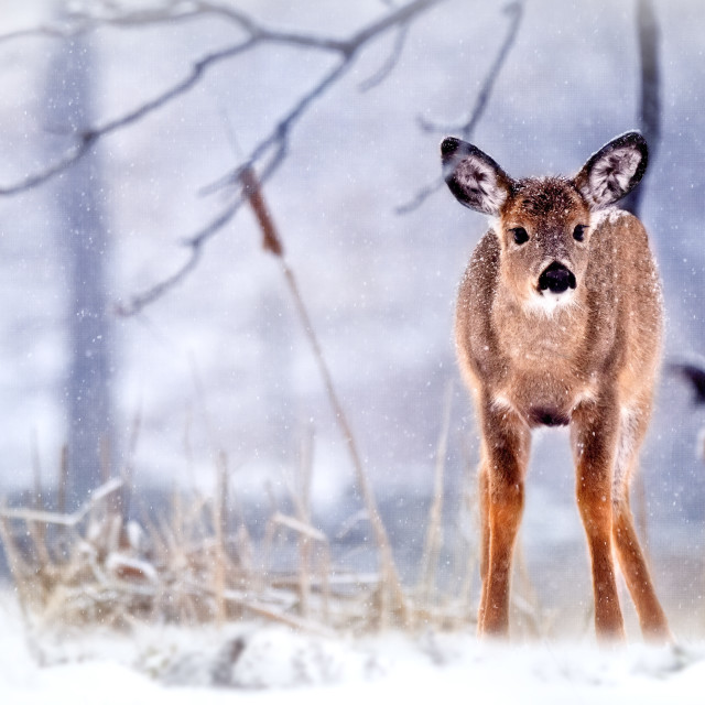 """""""The Yearling"""" stock image"""