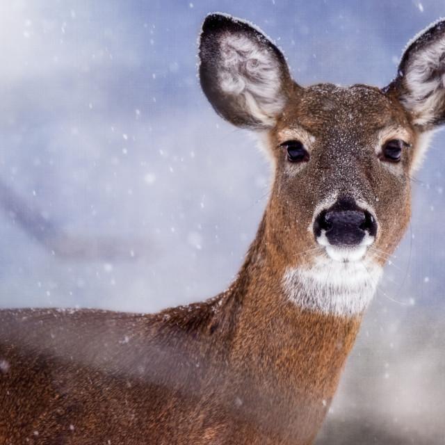 """""""SnowWhite"""" stock image"""