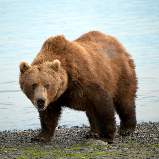 """Mama Bear"" stock image"