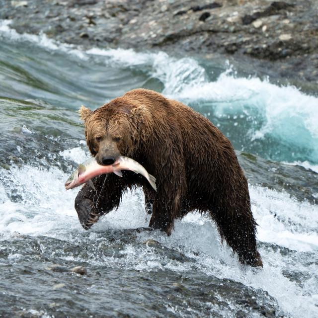 """Expert Fisherman"" stock image"