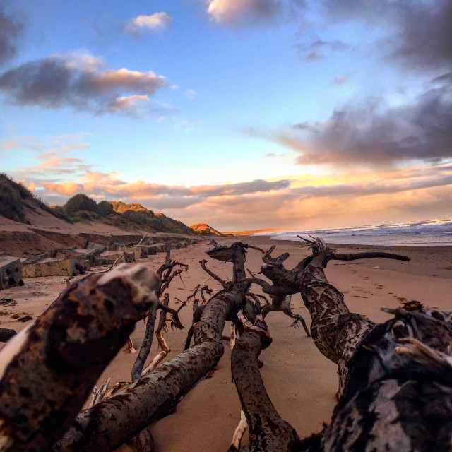 """Drift wood On the beach"" stock image"