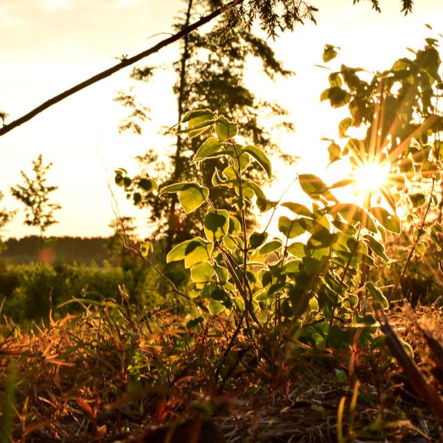 """""""Amazing sunset"""" stock image"""