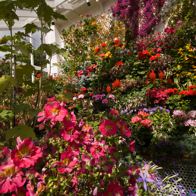 """""""Balmoral Castle Conservatory"""" stock image"""