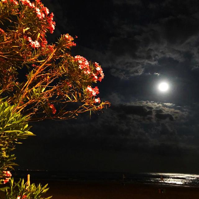 """Notte luna piena"" stock image"
