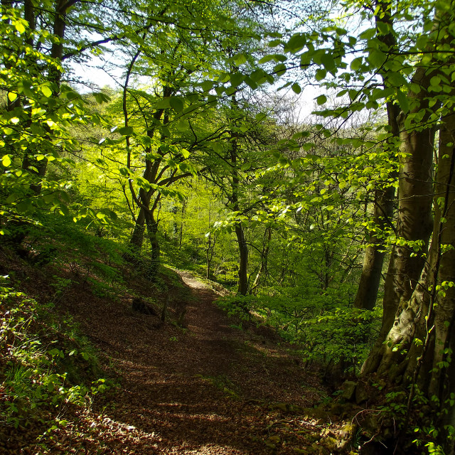 """""""Forest Walk No29"""" stock image"""