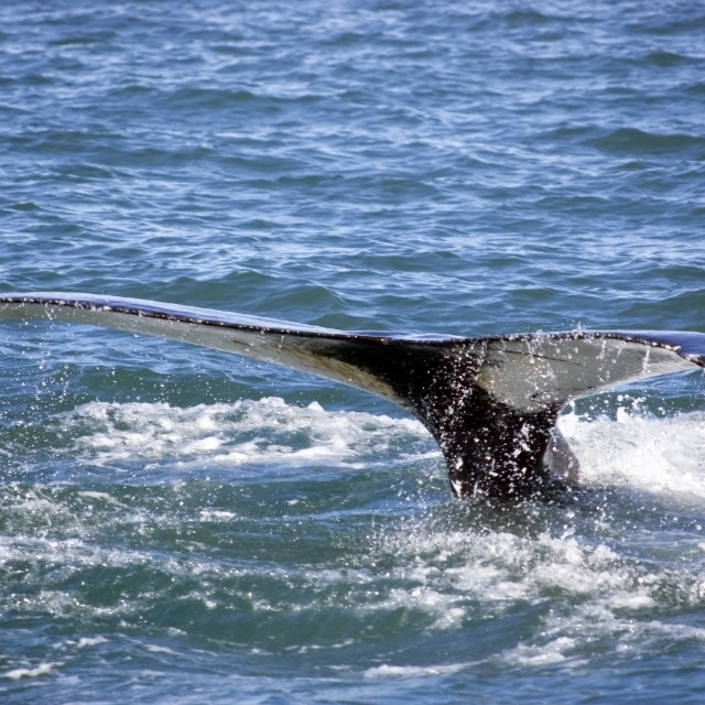 """""""Whale Tail"""" stock image"""