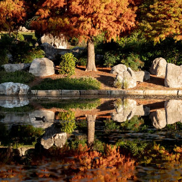"""""""Autumn evening in Nurragingy"""" stock image"""