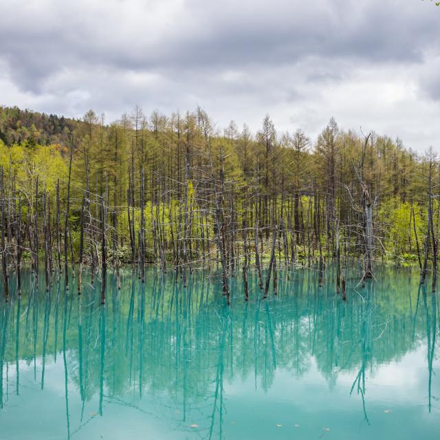 """""""Blue Pond, Shirogane, Hokkaido, Japan"""" stock image"""