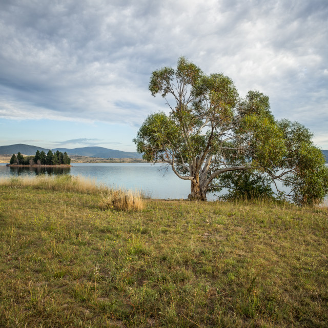 """The Tree, Jindabyne Lake, Australia"" stock image"
