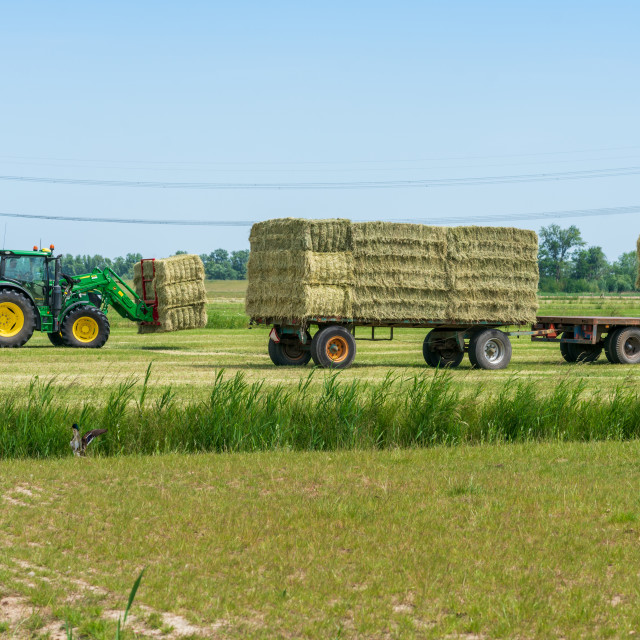"""Harvesting bales of hay 17"" stock image"