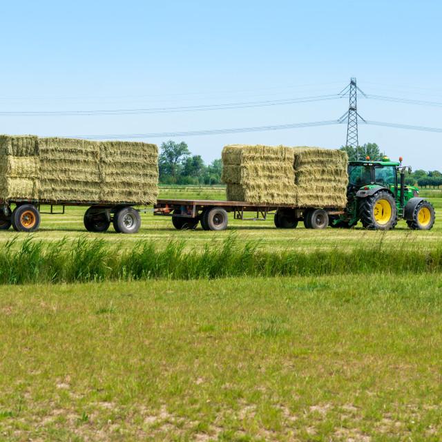 """Harvesting bales of hay 16"" stock image"