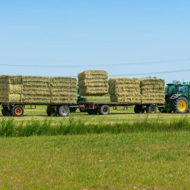 """Harvesting bales of hay 18"" stock image"