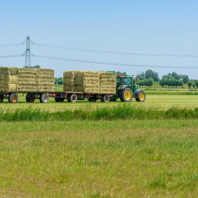 """Harvesting bales of hay 19"" stock image"