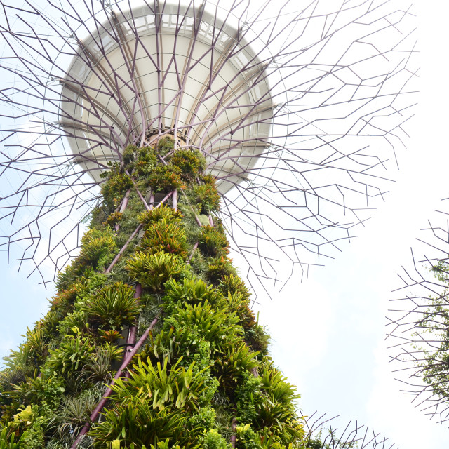 """""""Supertree Grove, Gardens by the Bay, Singapore"""" stock image"""