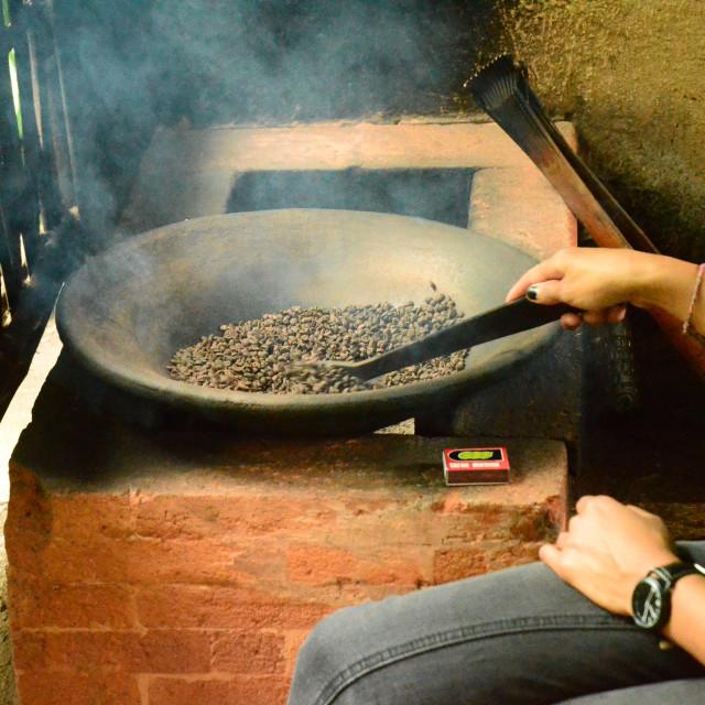 """Coffee Production, Bali, Indonesia"" stock image"