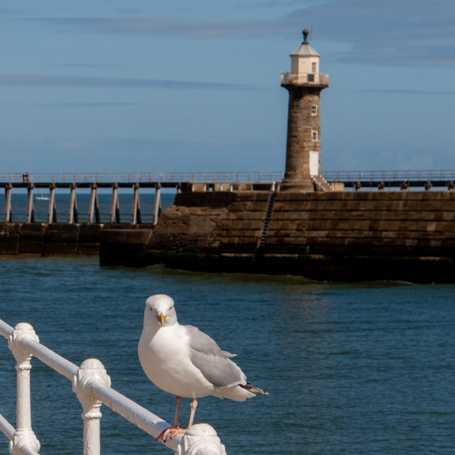 """""""Whitby, UK, East Yorkshire Coast. Herring Gull Sat on Harbour Railing. East Pier Lighthouse in the Background"""" stock image"""