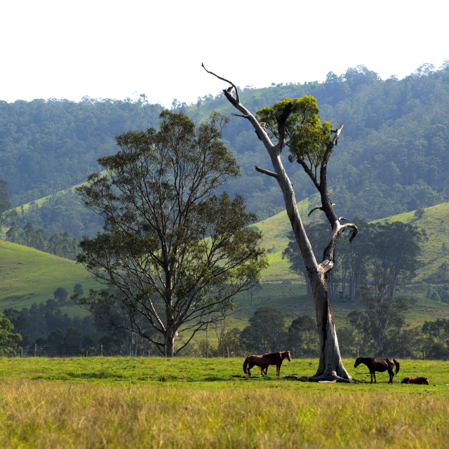 """Riverwood Down - Australia"" stock image"