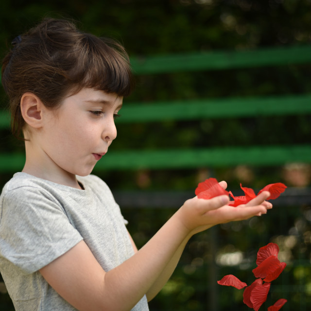 """""""A little girl blows on red petals to make them fly from her hand"""" stock image"""