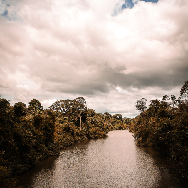 """""""River landscape in the Amazon"""" stock image"""
