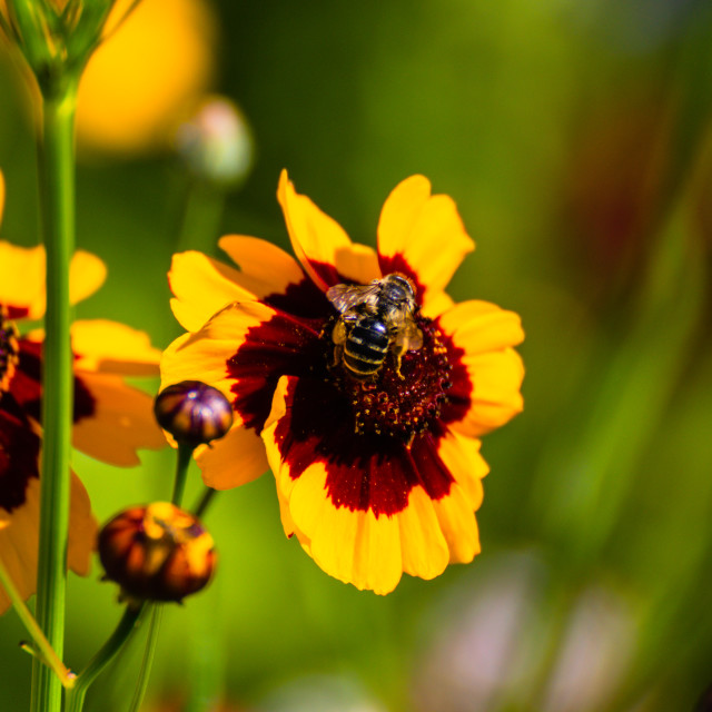 """Beefriendly flowers"" stock image"