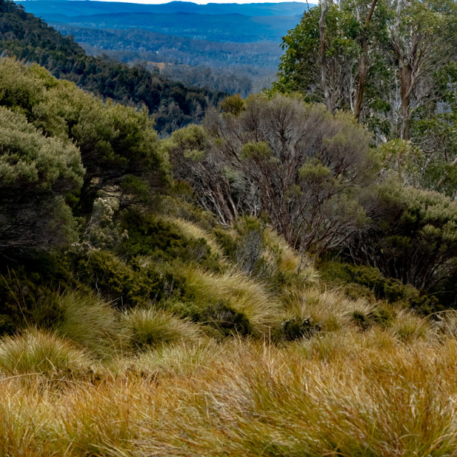 """Tasmanian High Country vista"" stock image"