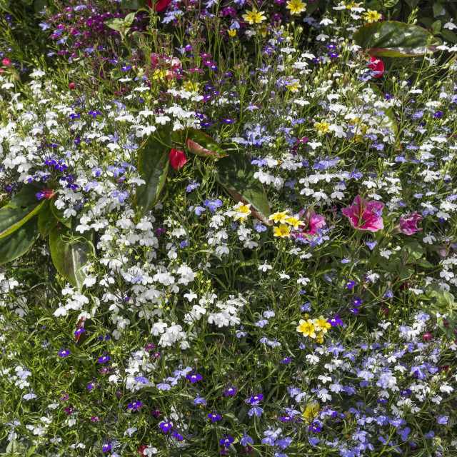 """""""Floral background"""" stock image"""