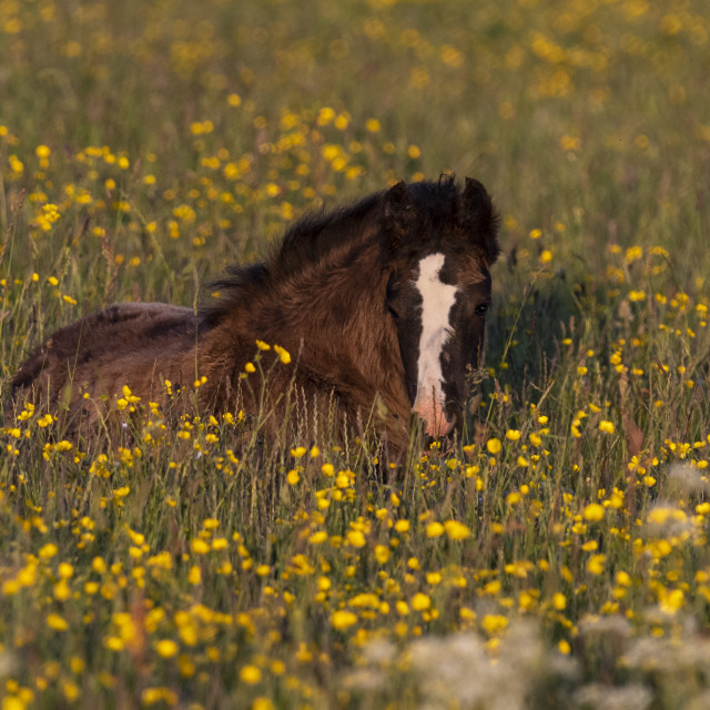 """""""Foal in the grass."""" stock image"""