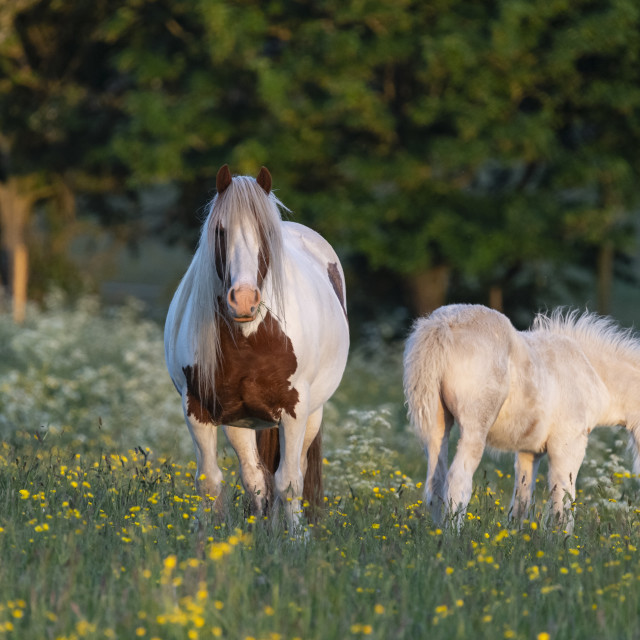 """""""Mare and foal."""" stock image"""