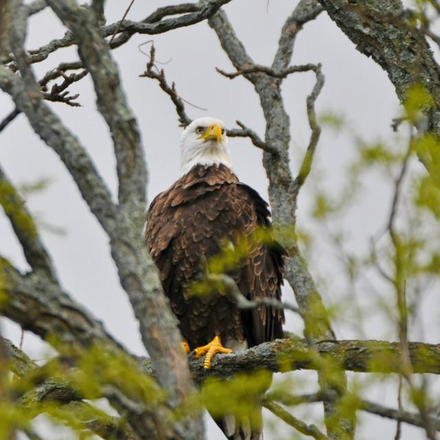 """""""Eagle 3"""" stock image"""
