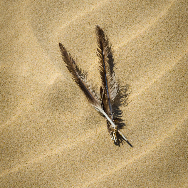 """""""Feathers Drifting on Waves of Sand"""" stock image"""