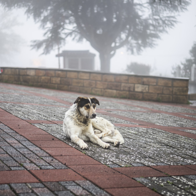 """A lonely dog, Li Shan, Taiwan"" stock image"