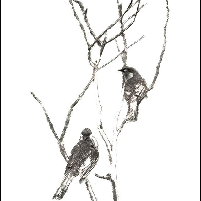 """""""Little wattlebird - sumie style"""" stock image"""