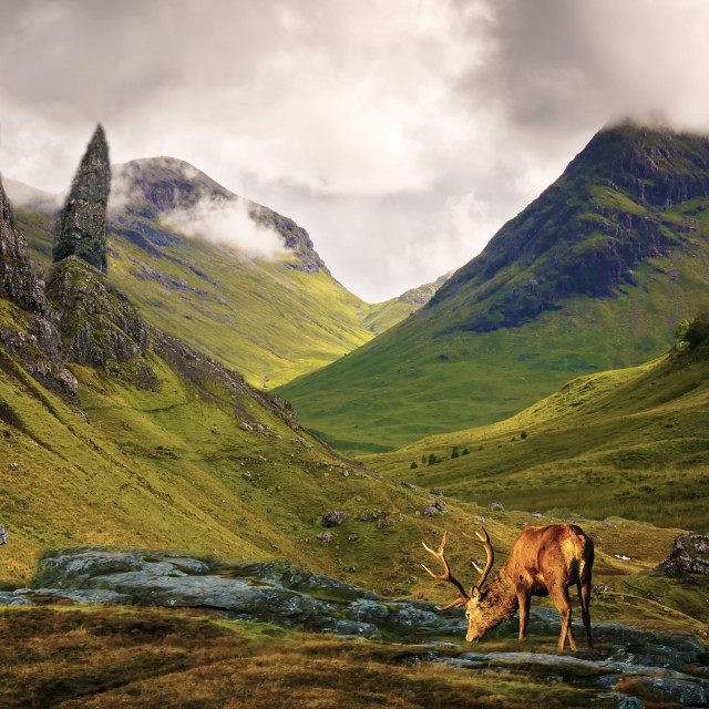 """""""Monarch of the Glen."""" stock image"""