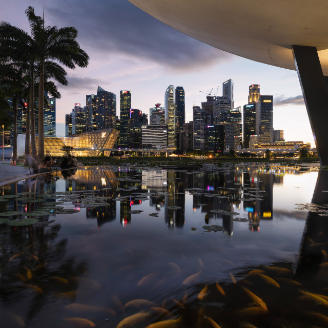 """""""Fish in a pond - Singapore Skyline at Sunset"""" stock image"""