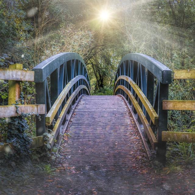 """Milton Country Park Bridge, Cambridge UK."" stock image"