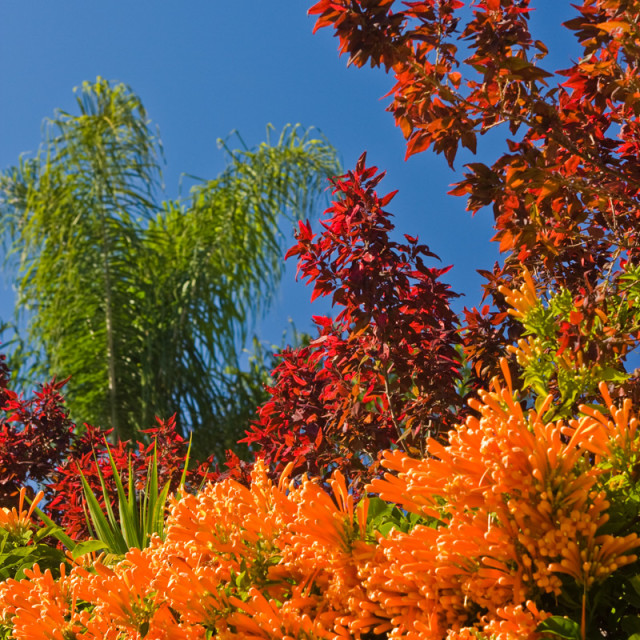 """Contrasting colorful foliage"" stock image"
