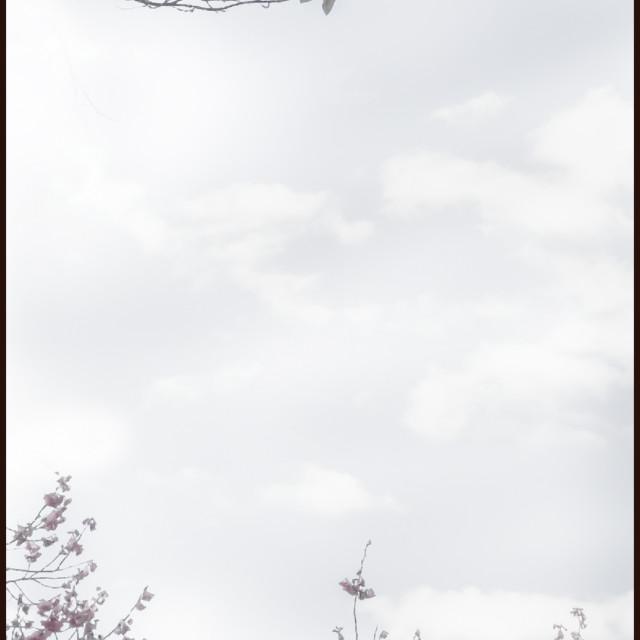 """""""Galahs landing"""" stock image"""