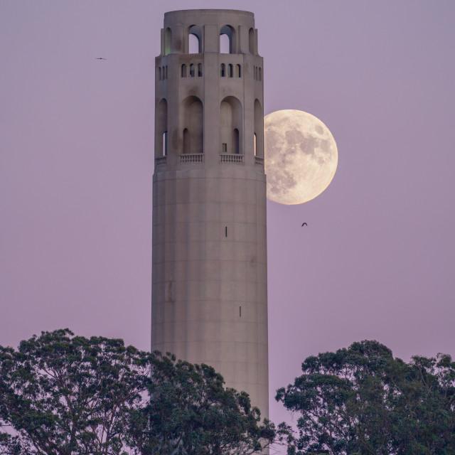 """Coit Tower Moonrise (colour)"" stock image"