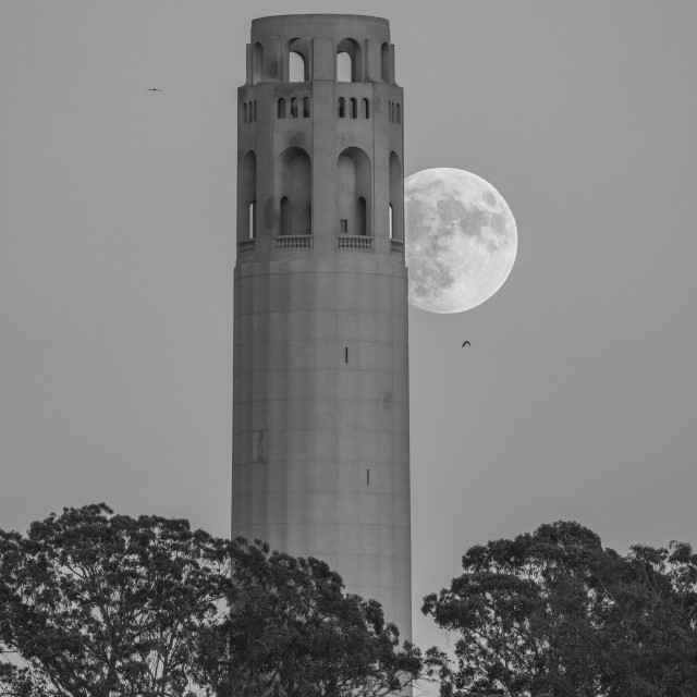 """Coit Tower Moonrise (black & white)"" stock image"