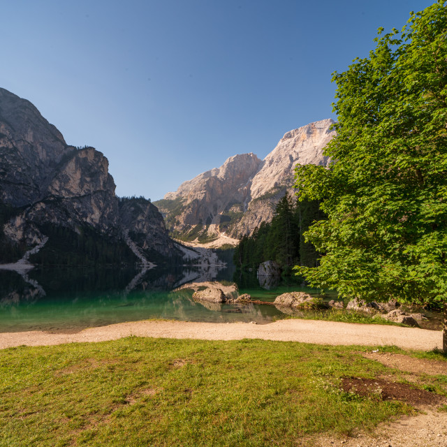 """""""Panoramic view of the Pragser Wildsee with a large green tree on"""" stock image"""